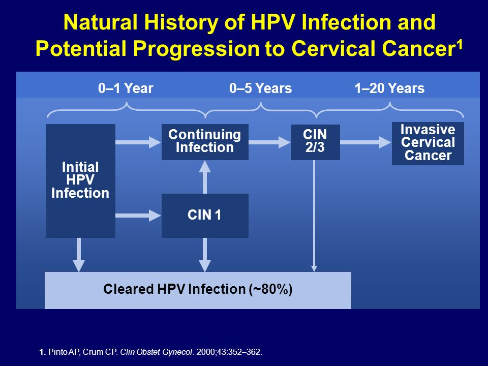 Invasive Cervical Cancer Cleared HPV Infection (~80%)