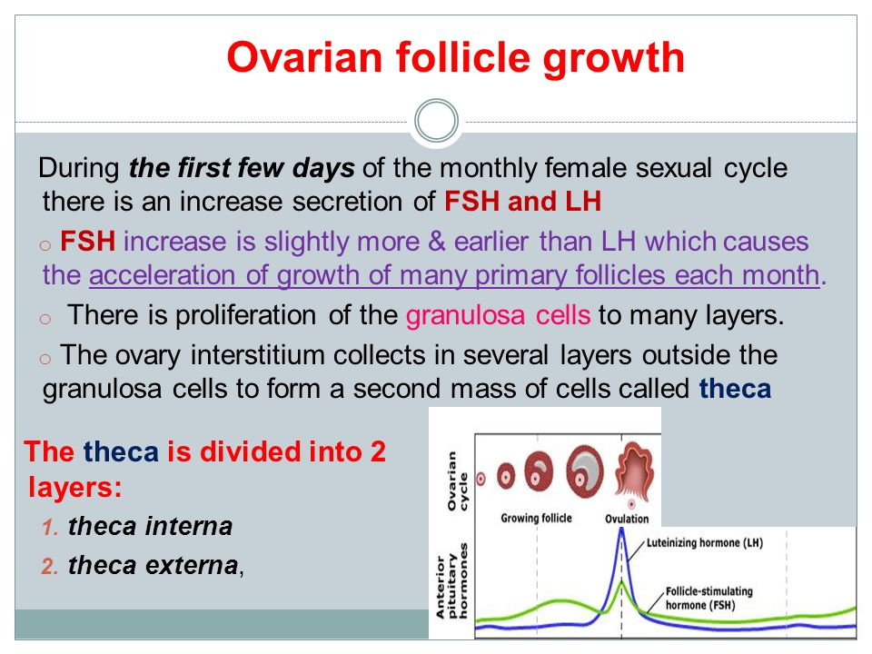 Physiology of Ovarian Cycle GUYTON & HALL, Chapter ppt video