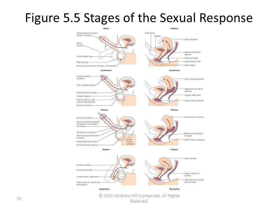 Stages of normal sexual response cycle