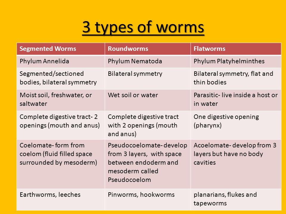 phylum platyhelminthes nematoda annelida