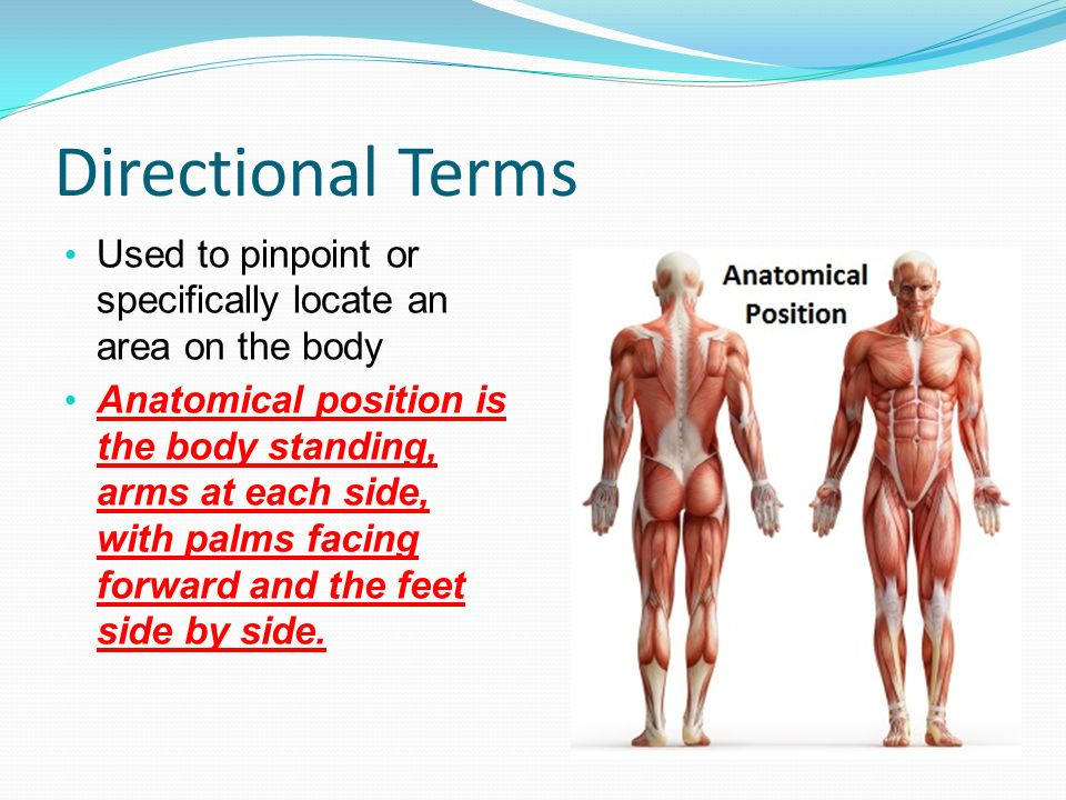 directionalterms Directional terms are used to describe exactly where one body structure is in relation to another they are used assuming that the body is standing with feet only slightly apart and the palms facing forward (called the anatomical position) superior = towards or at the upper part of a structure inferior = towards or at the lower part of a structure anterior = towards or at the front of a body.