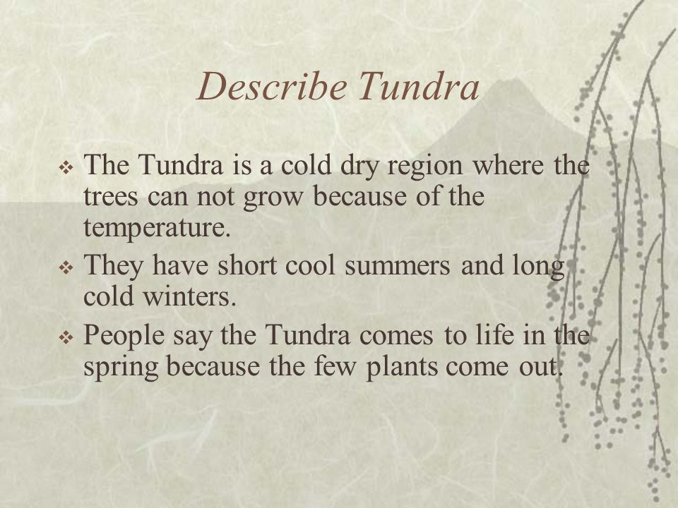 Describe Tundra The Tundra is a cold dry region where the trees can not grow because of the temperature.