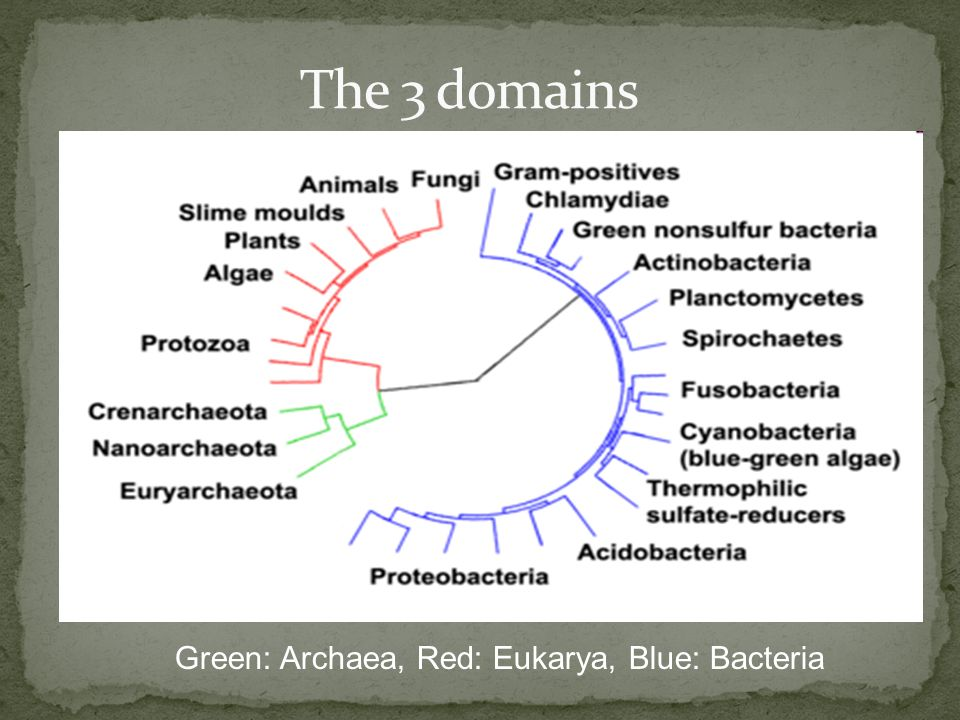 The 3 domains Green: Archaea, Red: Eukarya, Blue: Bacteria
