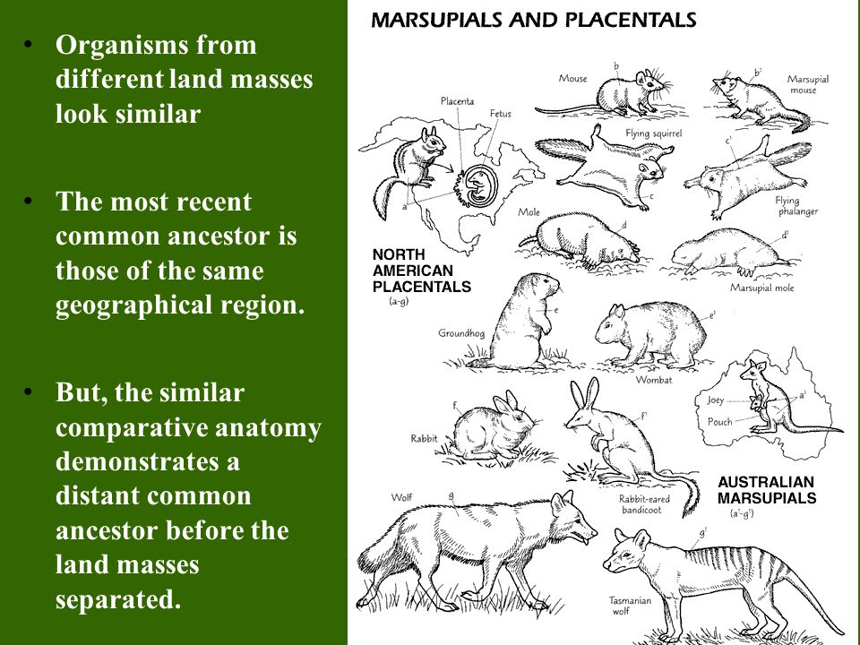 Organisms from different land masses look similar