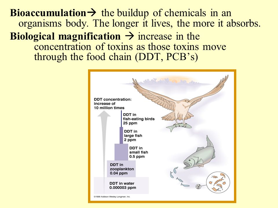 Bioaccumulation the buildup of chemicals in an organisms body