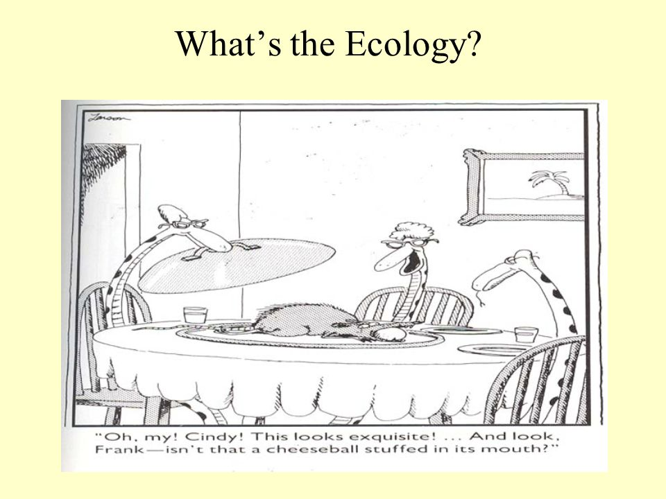 What's the Ecology