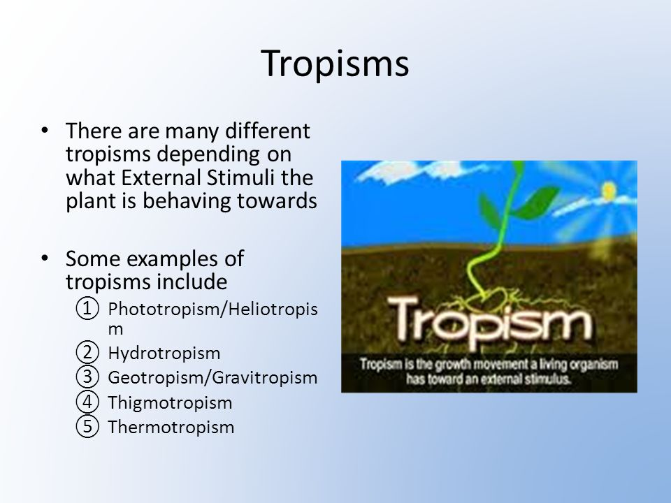 How Plants Respond To External Stimuli Ppt Video Online Download