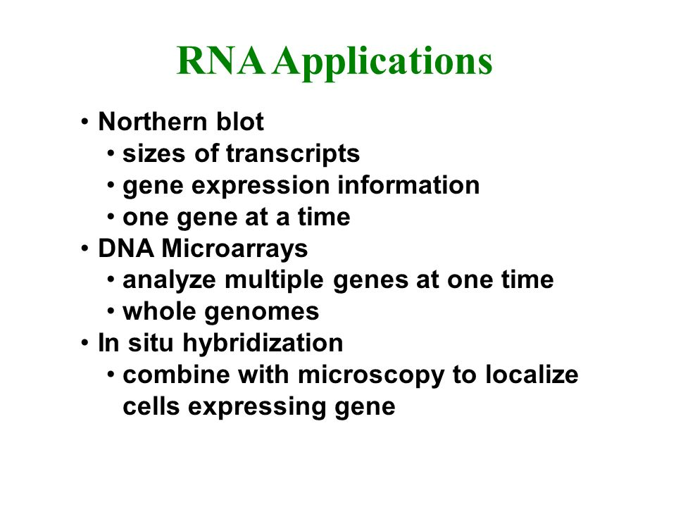 RNA Applications Northern blot sizes of transcripts