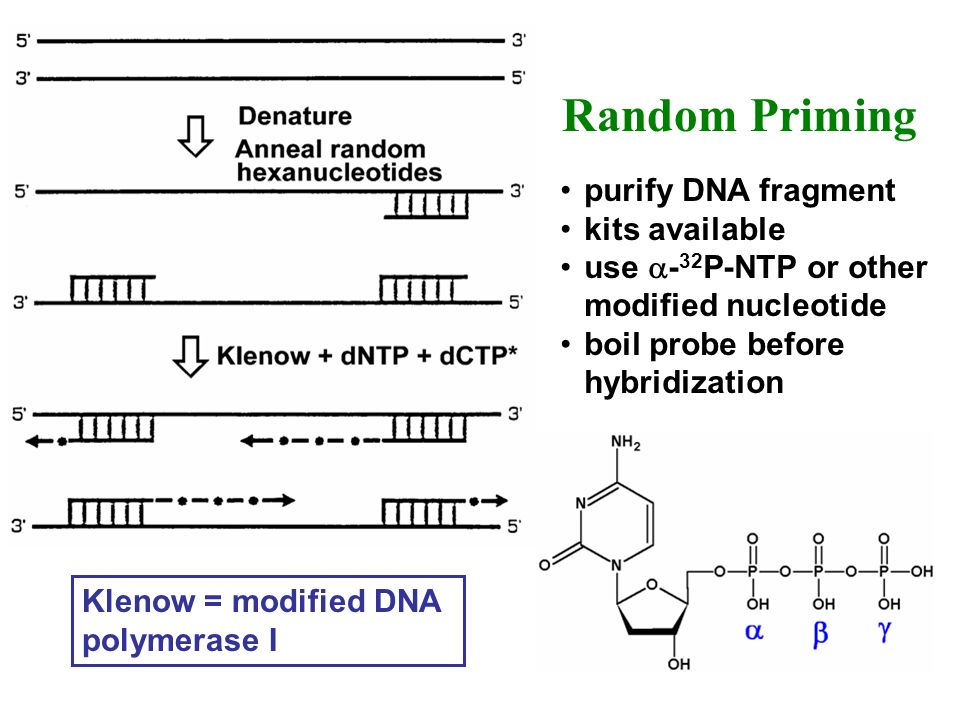 Random Priming purify DNA fragment kits available