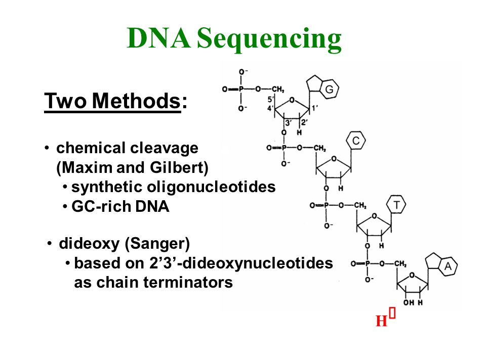 DNA Sequencing Two Methods: chemical cleavage xxx (Maxim and Gilbert)