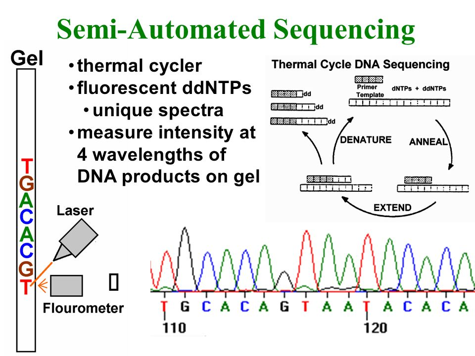 Semi-Automated Sequencing