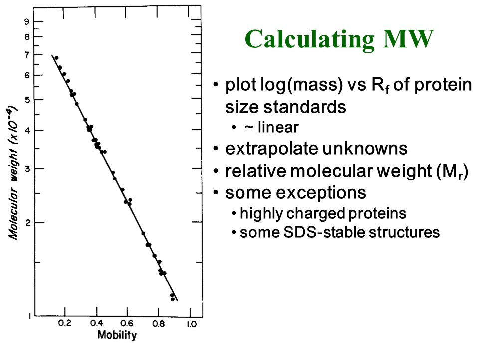 Calculating MW plot log(mass) vs Rf of protein size standards