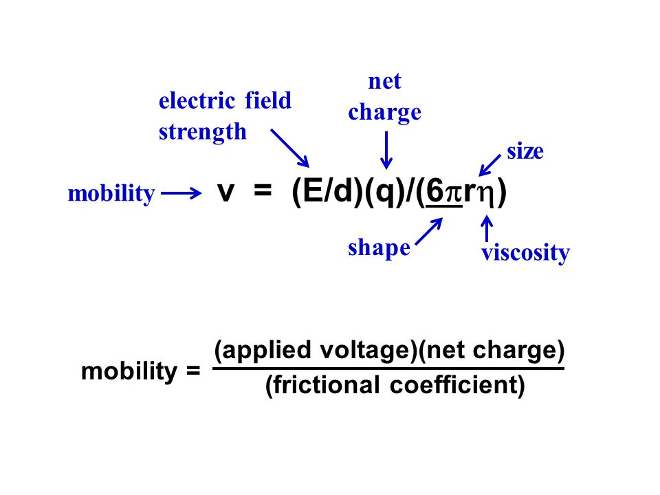 v = (E/d)(q)/(6r) net charge electric field strength size mobility