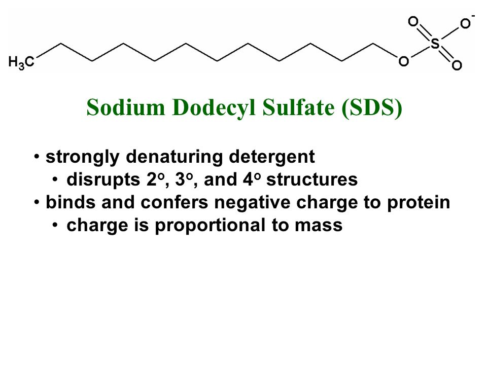 Sodium Dodecyl Sulfate (SDS)