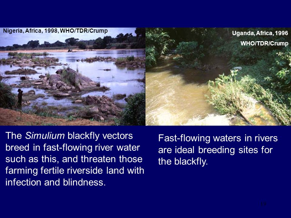 Fast-flowing waters in rivers are ideal breeding sites for the blackfly.
