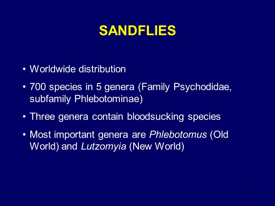 SANDFLIES Worldwide distribution