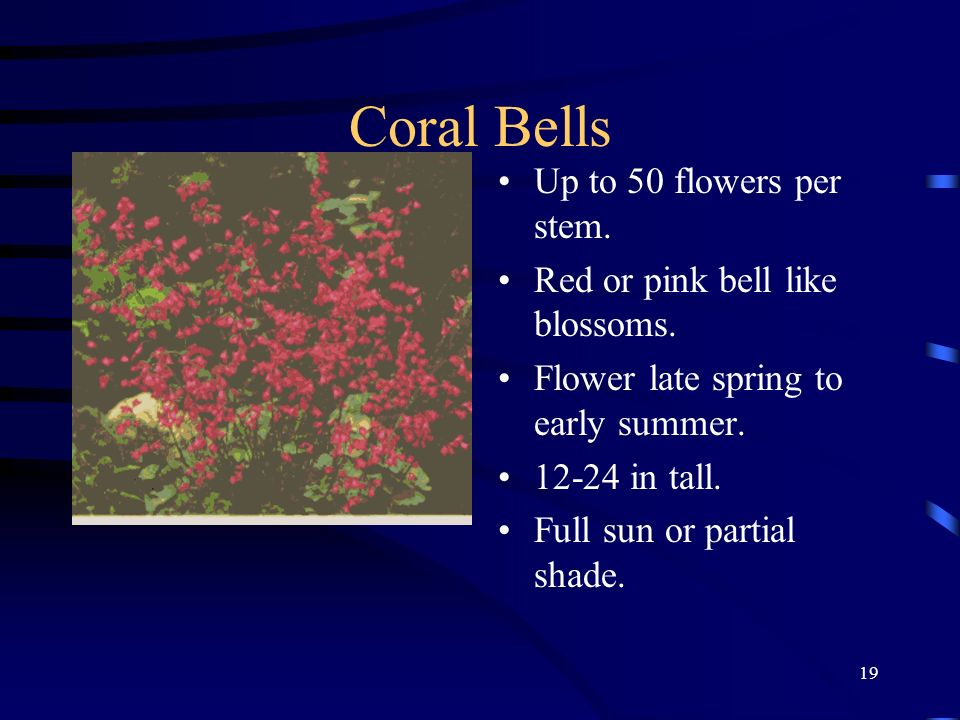Coral Bells Up to 50 flowers per stem. Red or pink bell like blossoms.