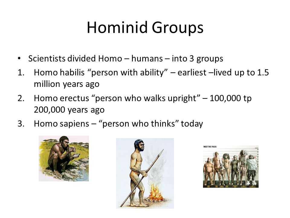 Hominid Groups Scientists divided Homo – humans – into 3 groups