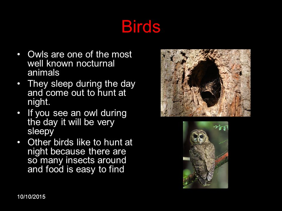 Image of: Horned Owl Birds Owls Are One Of The Most Well Known Nocturnal Animals World Of Owls Animals That Are Most Active At Night Wood Ppt Video Online Download