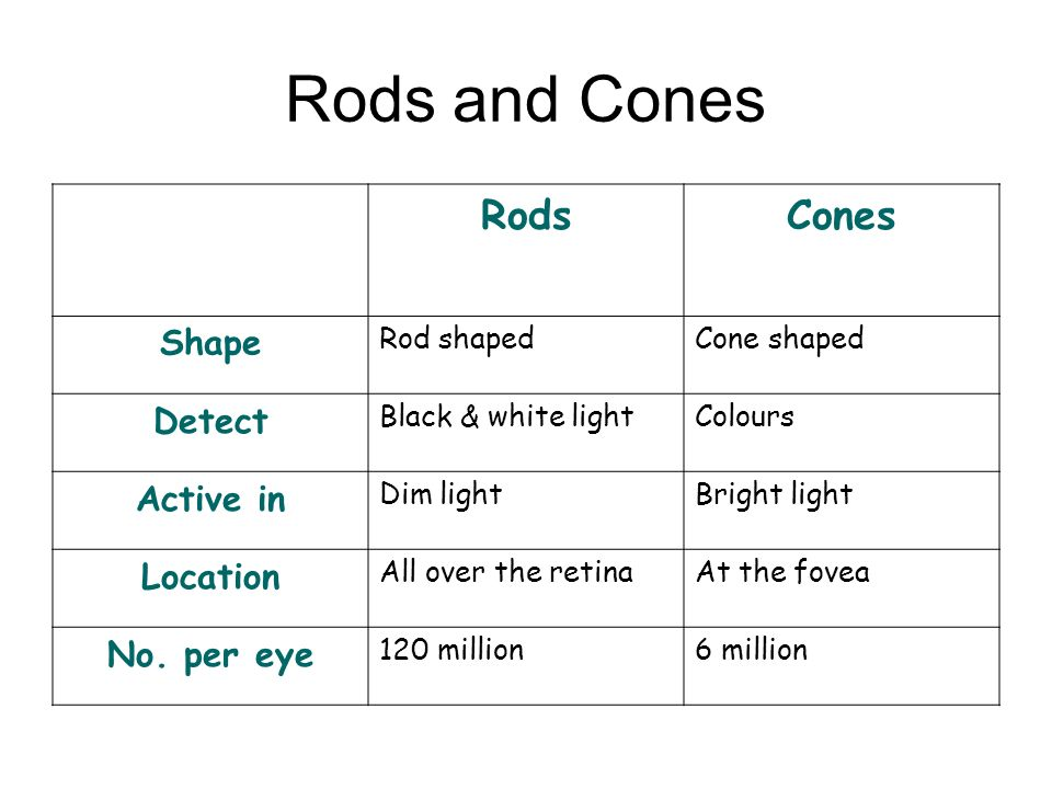 Rods and Cones Rods Cones Shape Detect Active in Location No. per eye