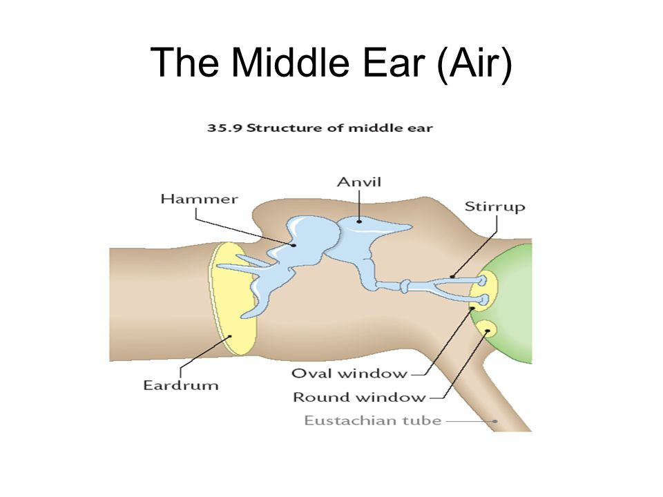 The Middle Ear (Air)
