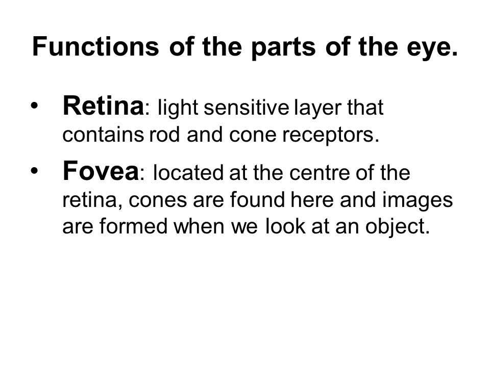 Functions of the parts of the eye.