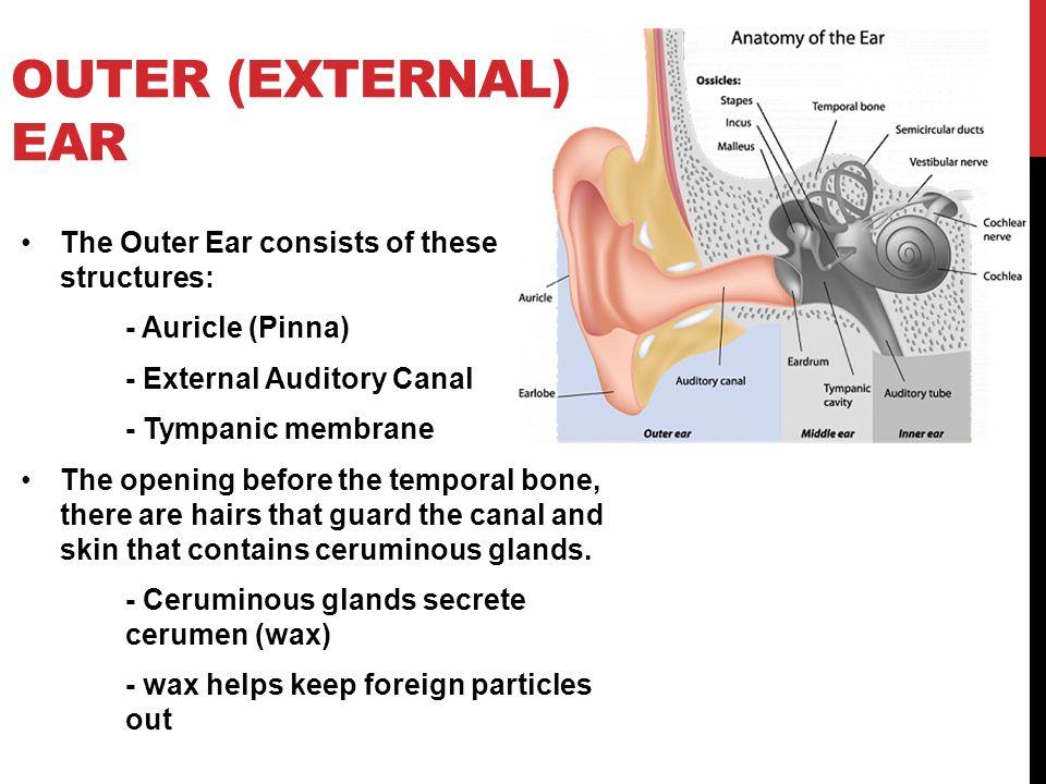 Summary -> Ear And Temporal Bone Cancer Cedarssinai