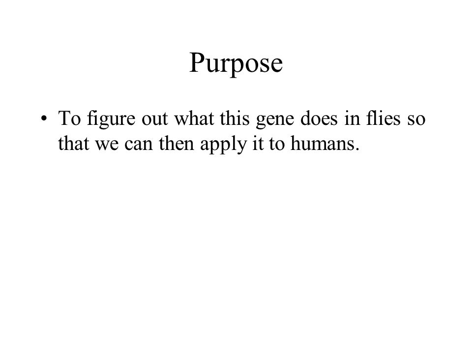 Purpose To figure out what this gene does in flies so that we can then apply it to humans.