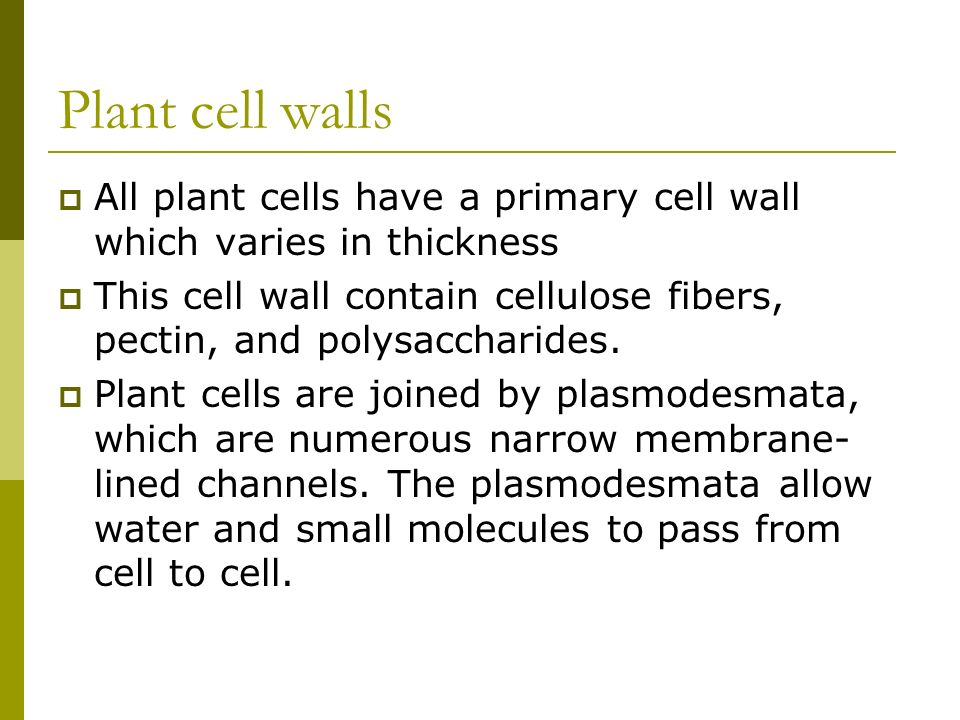 Plant cell walls All plant cells have a primary cell wall which varies in thickness.