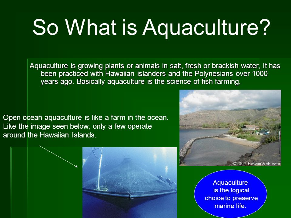 So What is Aquaculture