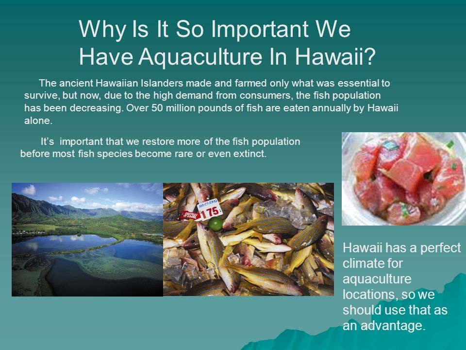 Why Is It So Important We Have Aquaculture In Hawaii