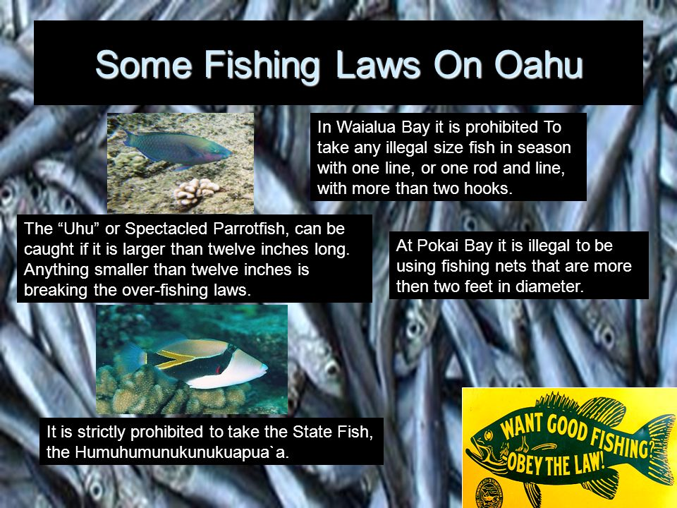Some Fishing Laws On Oahu
