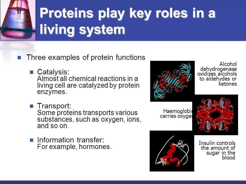 proteins play countless roles - 960×720
