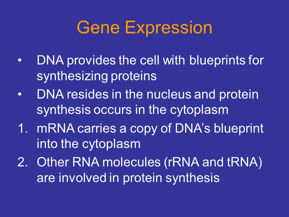 Chapter 21 dna biology and technology ppt video online download 14 gene expression malvernweather Gallery