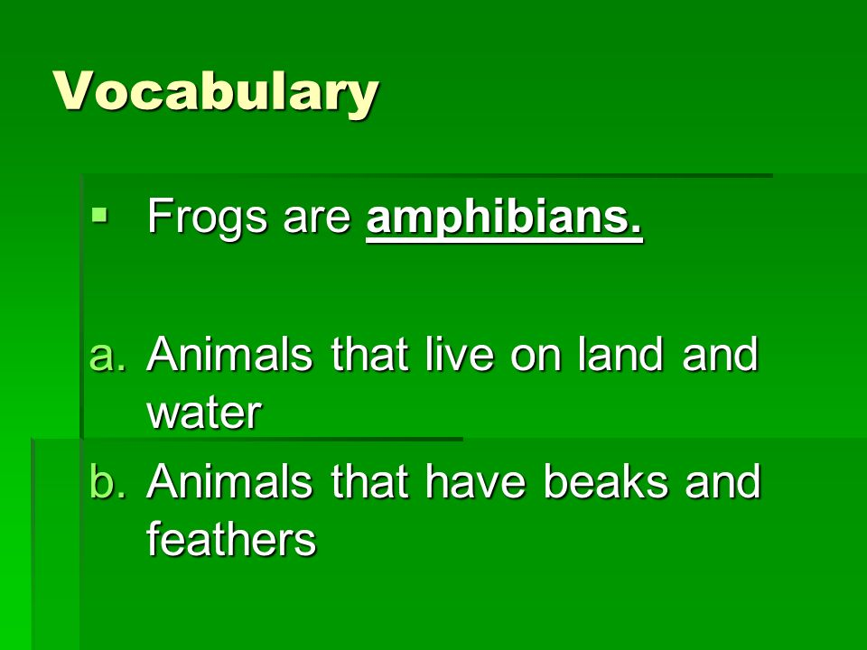Vocabulary Frogs are amphibians. Animals that live on land and water