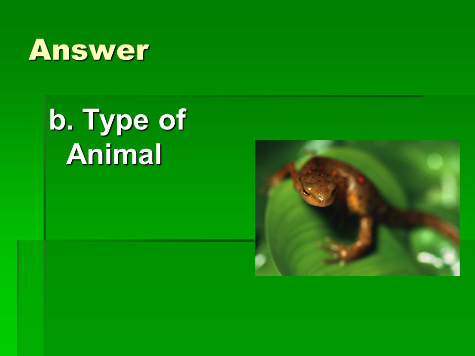Answer b. Type of Animal