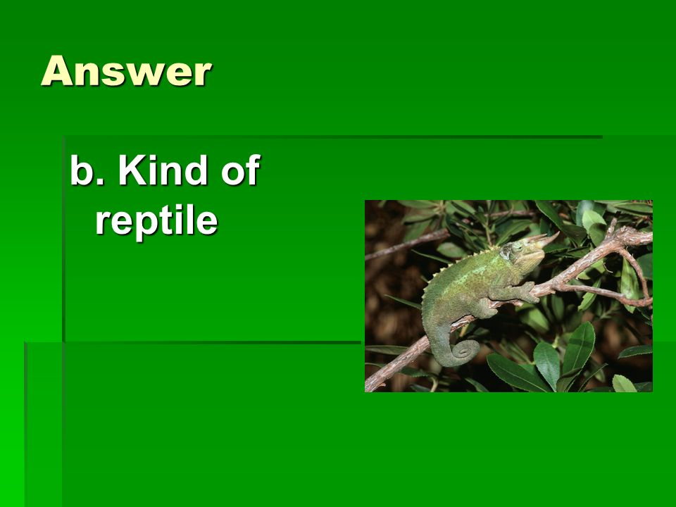 Answer b. Kind of reptile