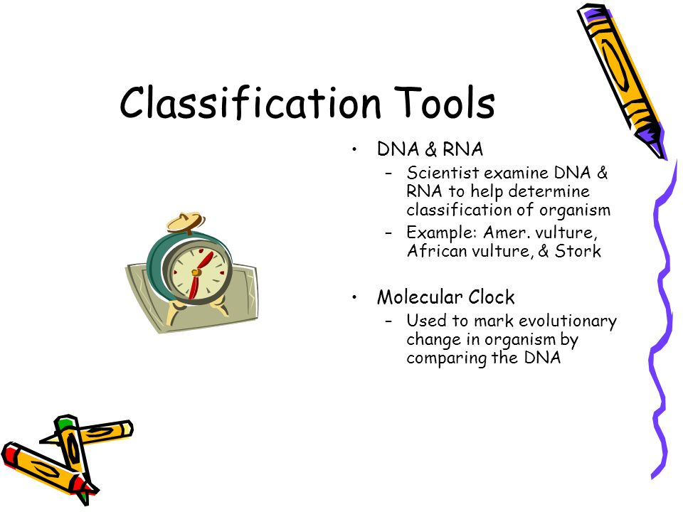 Classification Tools DNA & RNA Molecular Clock