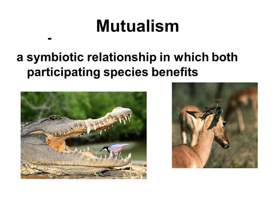 Mutualism - a symbiotic relationship in which both participating species benefits