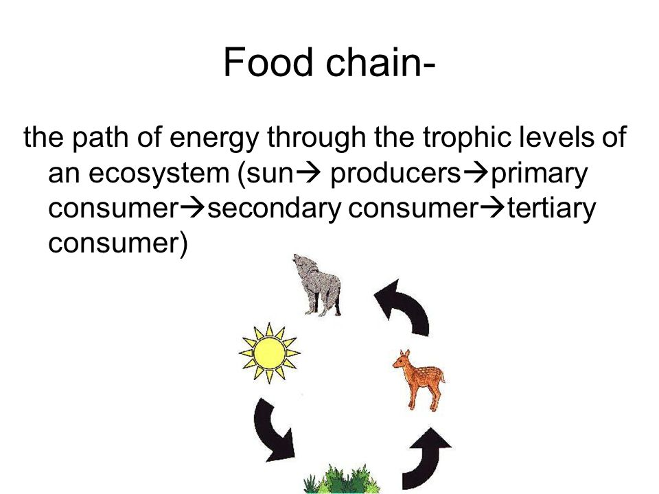 Food chain- the path of energy through the trophic levels of an ecosystem (sun producersprimary consumersecondary consumertertiary consumer)