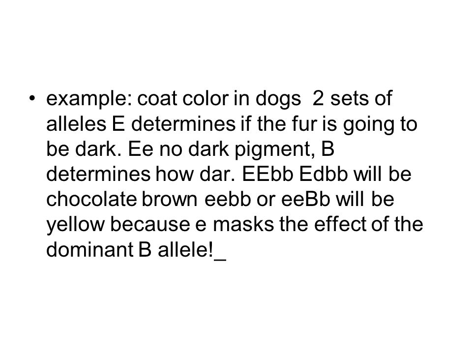 example: coat color in dogs 2 sets of alleles E determines if the fur is going to be dark.