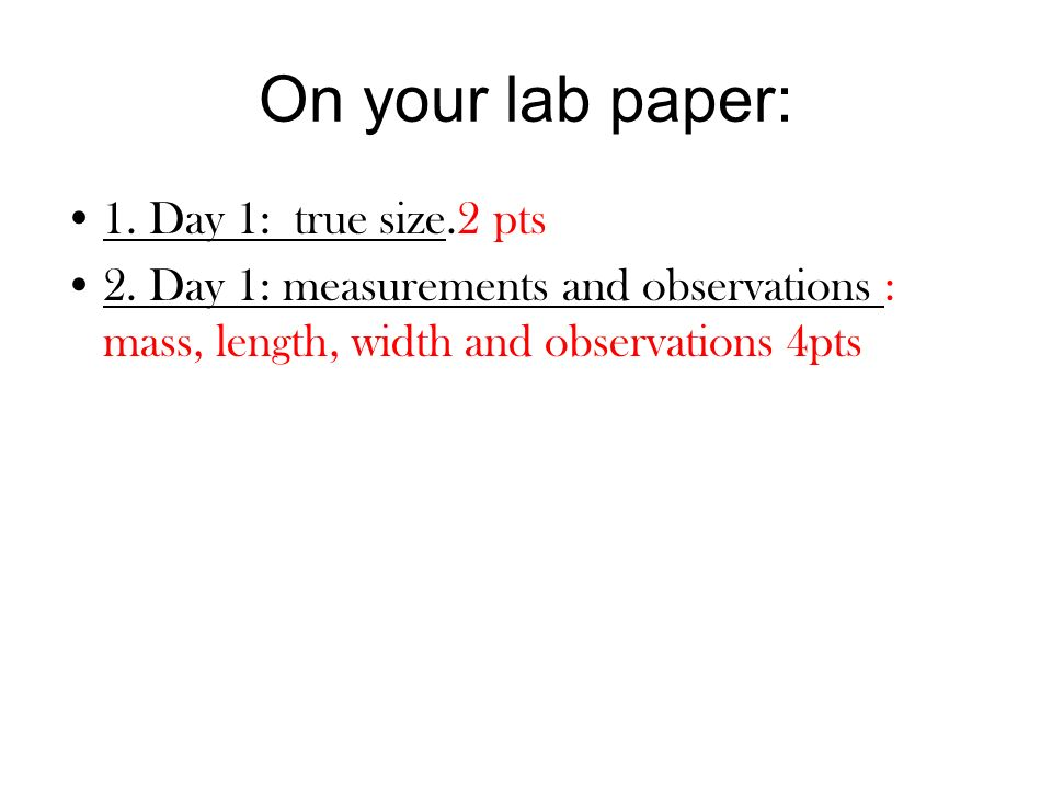 On your lab paper: 1. Day 1: true size.2 pts