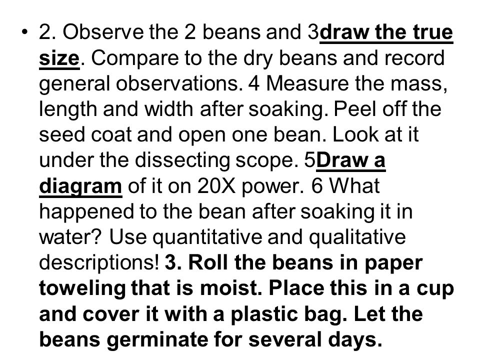 2. Observe the 2 beans and 3draw the true size