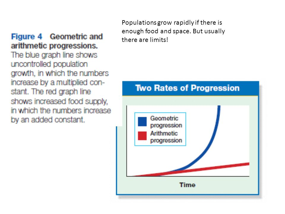 Populations grow rapidly if there is enough food and space