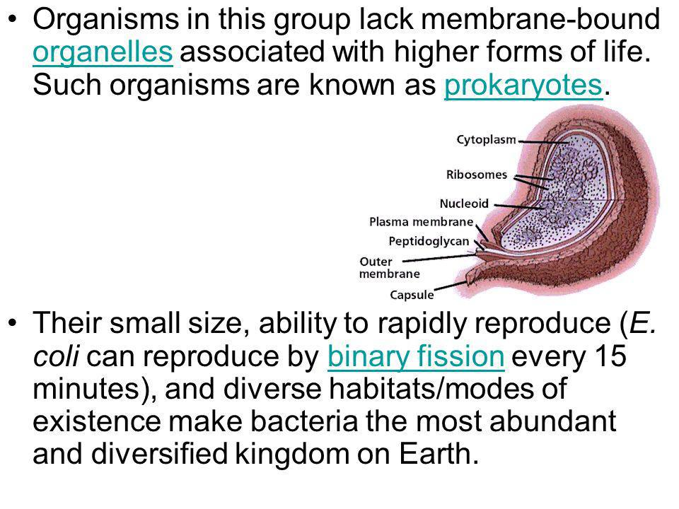 Organisms in this group lack membrane-bound organelles associated with higher forms of life. Such organisms are known as prokaryotes.