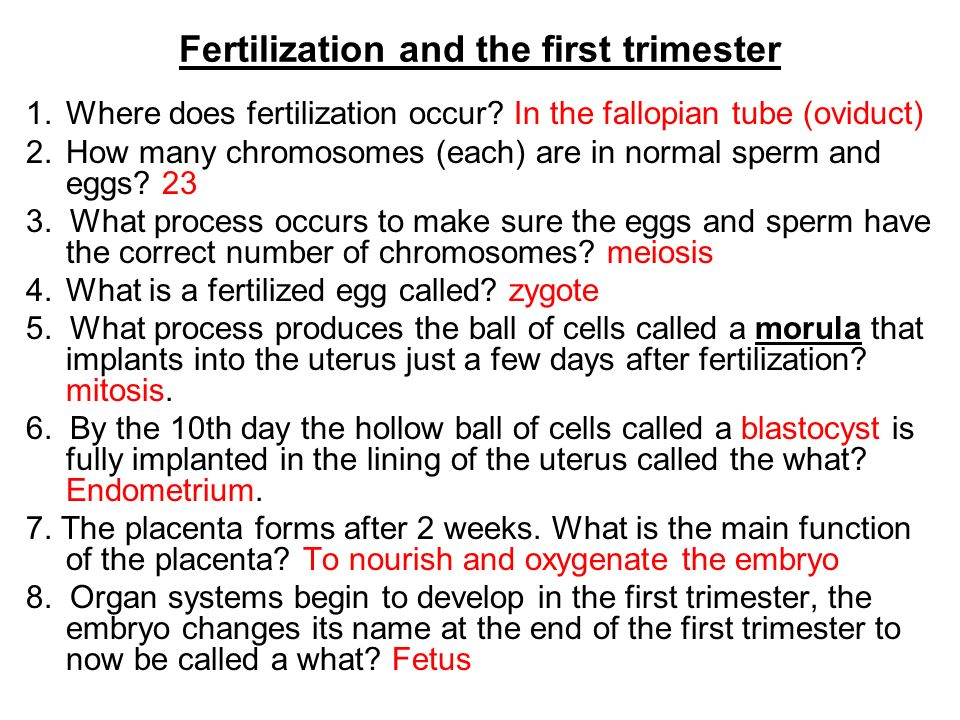 Fertilization and the first trimester