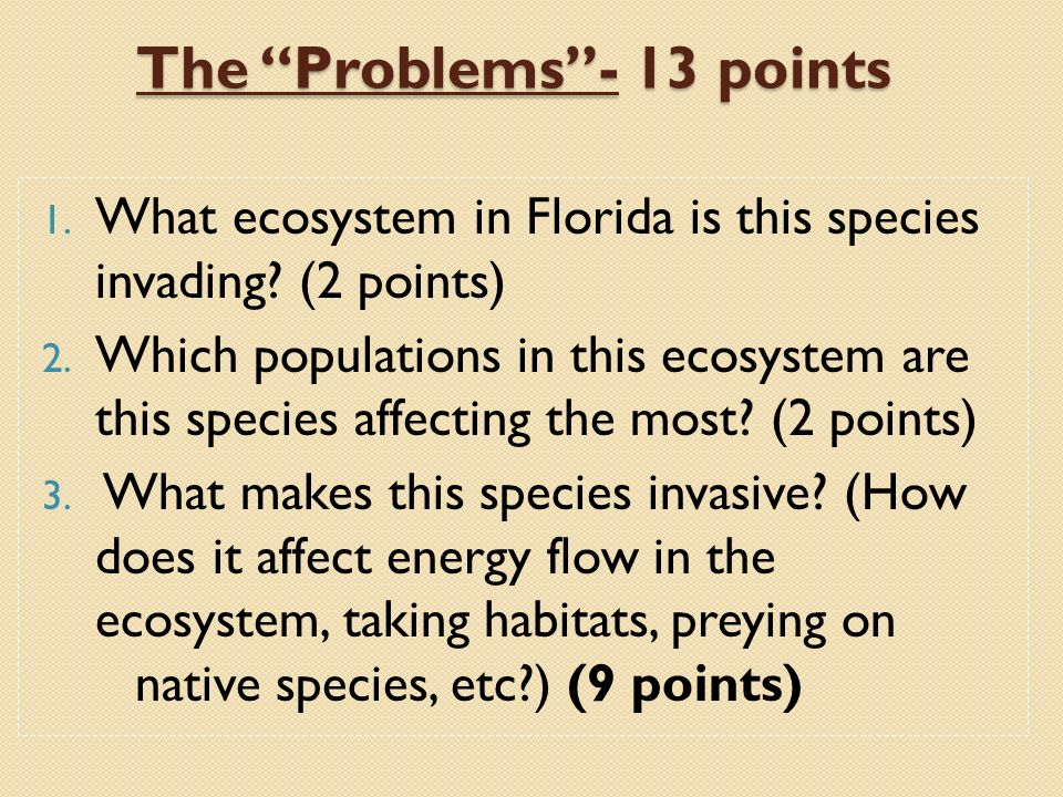 The Problems - 13 points
