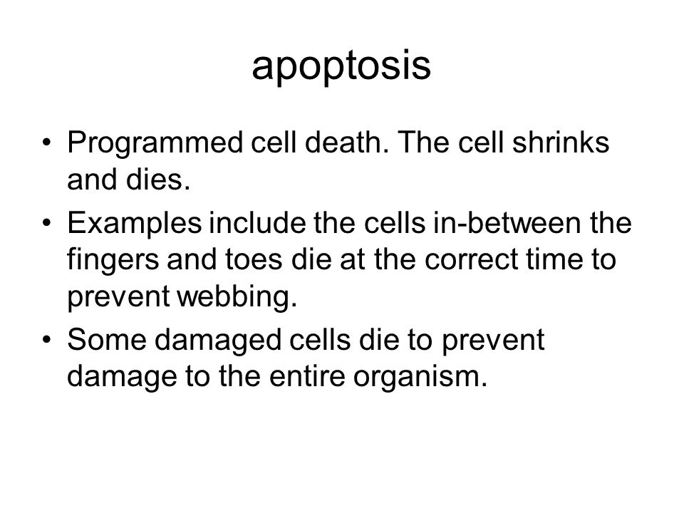 apoptosis Programmed cell death. The cell shrinks and dies.