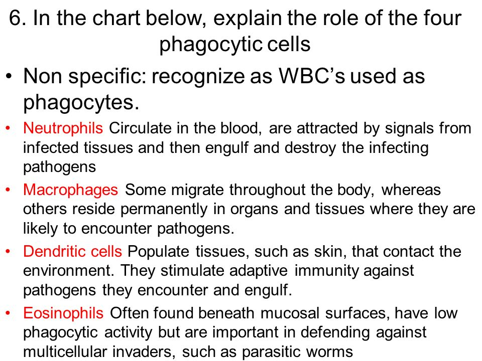6. In the chart below, explain the role of the four phagocytic cells