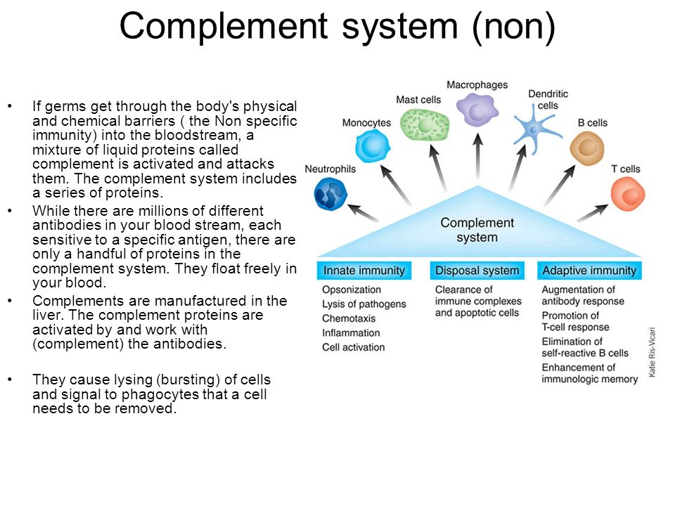 Complement system (non)